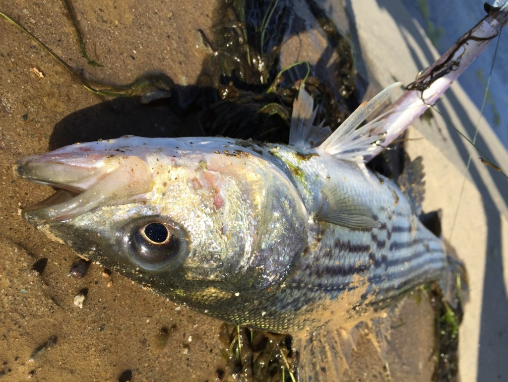 An Introduction To Fishing The California Aqueduct - California Aqueduct Fishing Map