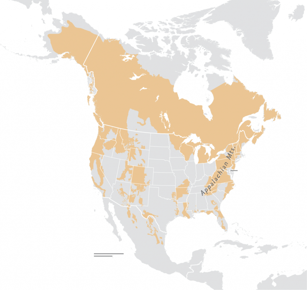 Black Bears Are Rebounding—What Does That Mean For People? - Bears In Florida Map