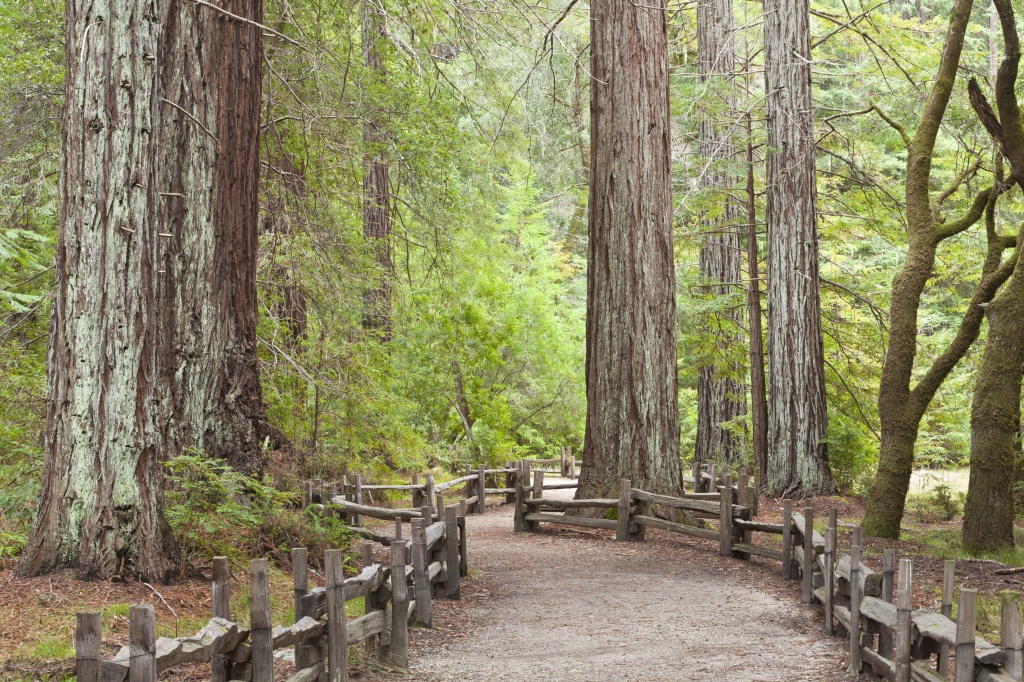 California Redwood Forests: Where To See The Big Trees - Giant Redwood Trees California Map