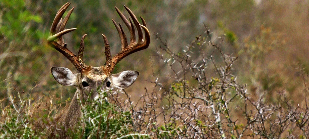 Deer Hunting Forecast 2017 | Outdoor Life - Texas Deer Population Map 2017