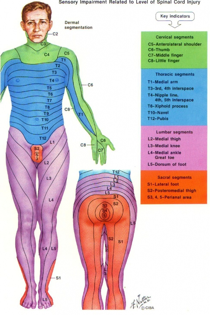 Dermatome Chart With Symptoms   More Pain First Thing In The Morning - Printable Dermatome Map