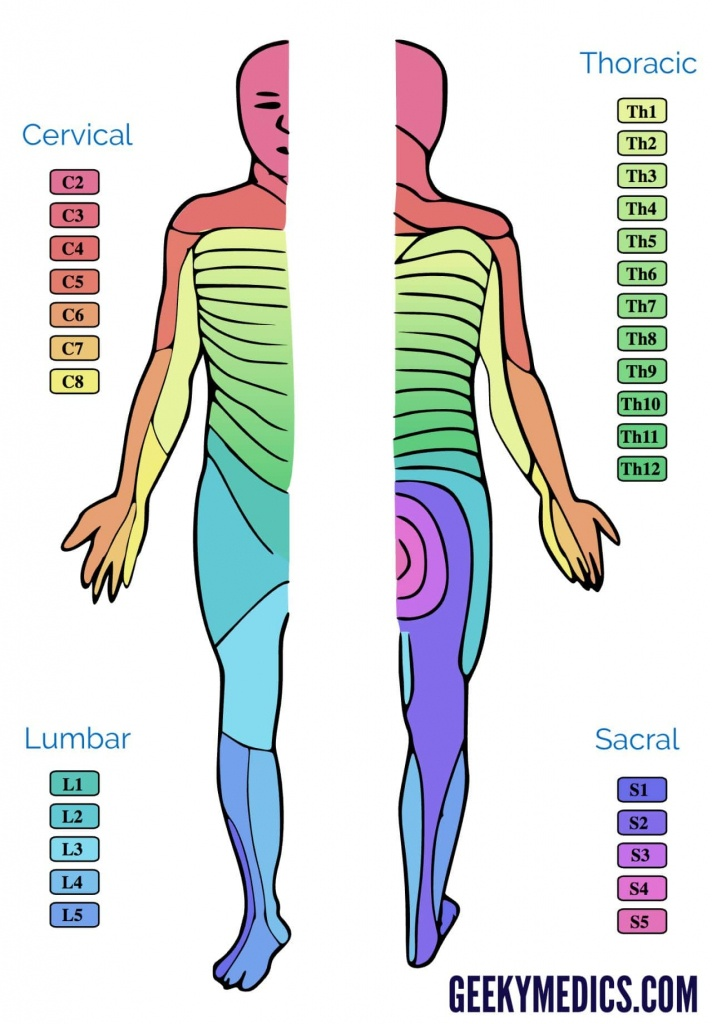 Dermatomes And Myotomes   Anatomy   Geeky Medics - Printable Dermatome Map