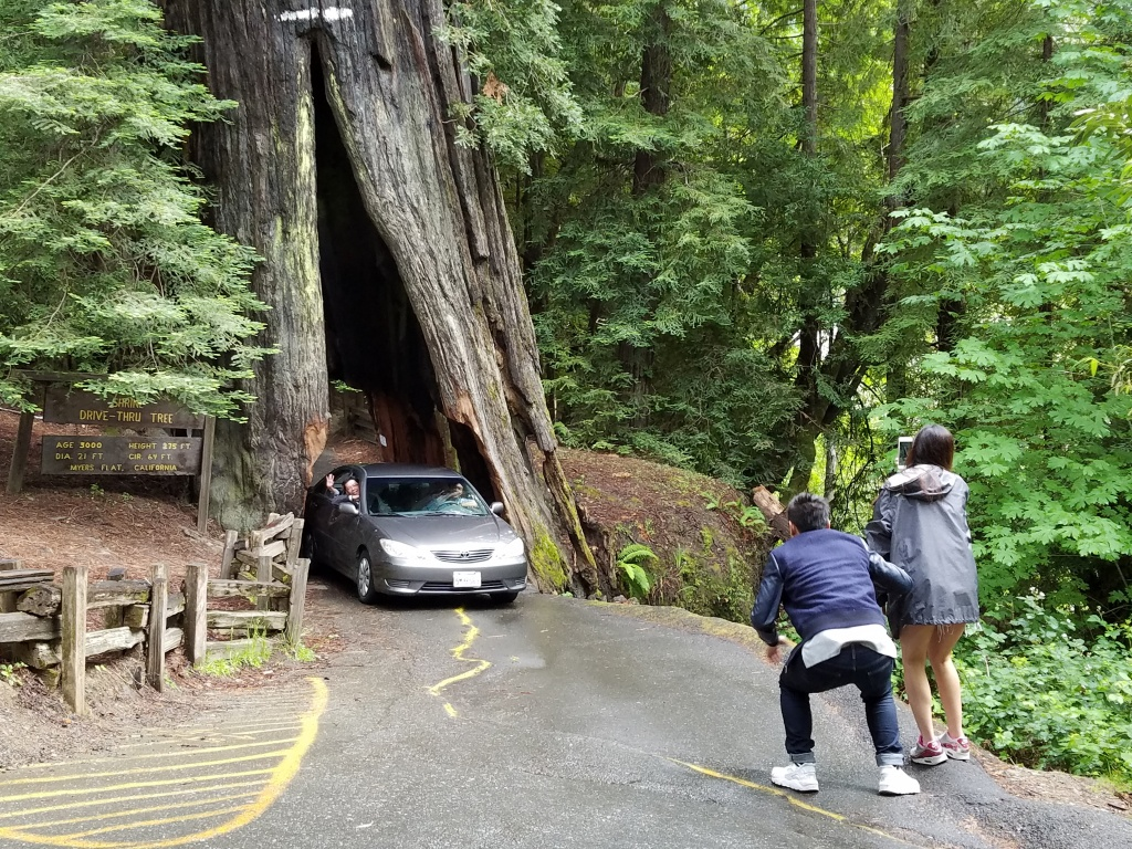 Drive Through Trees - Giant Redwood Trees California Map