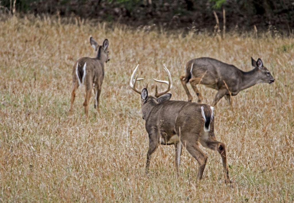 Exclusive: 2018 Peak Rut Forecast - Deer Rut Map Texas