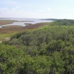 Great Texas Coastal Birding Trail   Wikipedia   Texas Birding Trail Maps