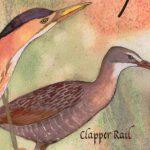 Great Texas Wildlife Trails   Wildlife   Texas Parks & Wildlife   Texas Birding Trail Maps