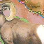Great Texas Wildlife Trails   Wildlife   Texas Parks & Wildlife   Texas Birding Trail Maps