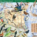 How To Purchase   Great Texas Wildlife Trails   Wildlife   Texas   Texas Birding Trail Maps
