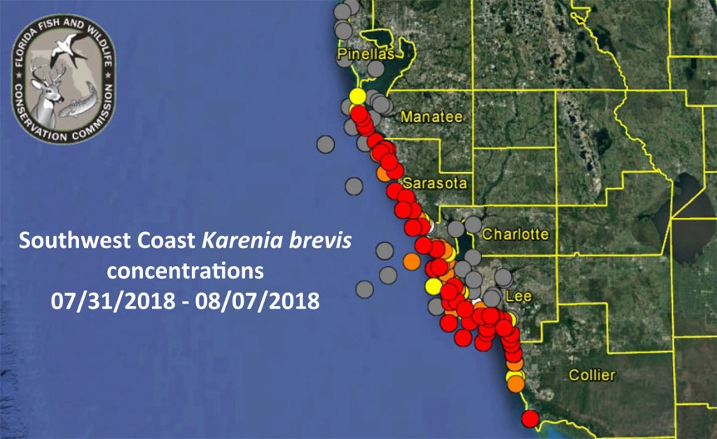 No Red Tide On Pinellas County Beaches As Of Aug. 8   Pinellas - Current Red Tide Map Florida