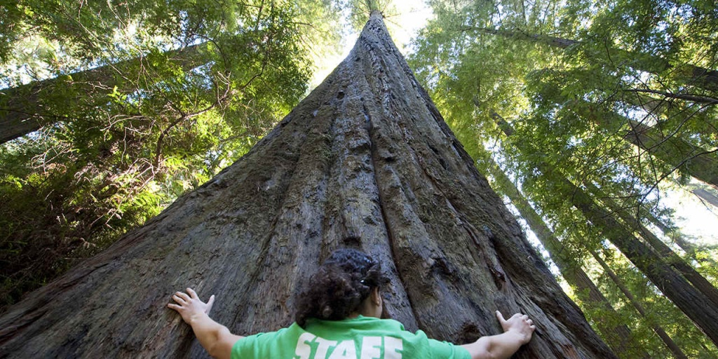 Places To See Big Trees | Visit California - Giant Redwood Trees California Map